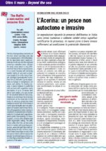 Screen_Acerina_un pesce non autoctono e invasivo